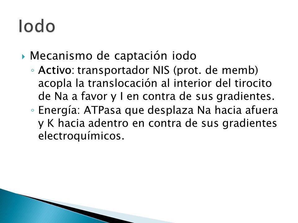 Mecanismo de captación iodo Activo: transportador NIS (prot. de memb) acopla la translocación al interior del tirocito de Na a favor y I en contra de