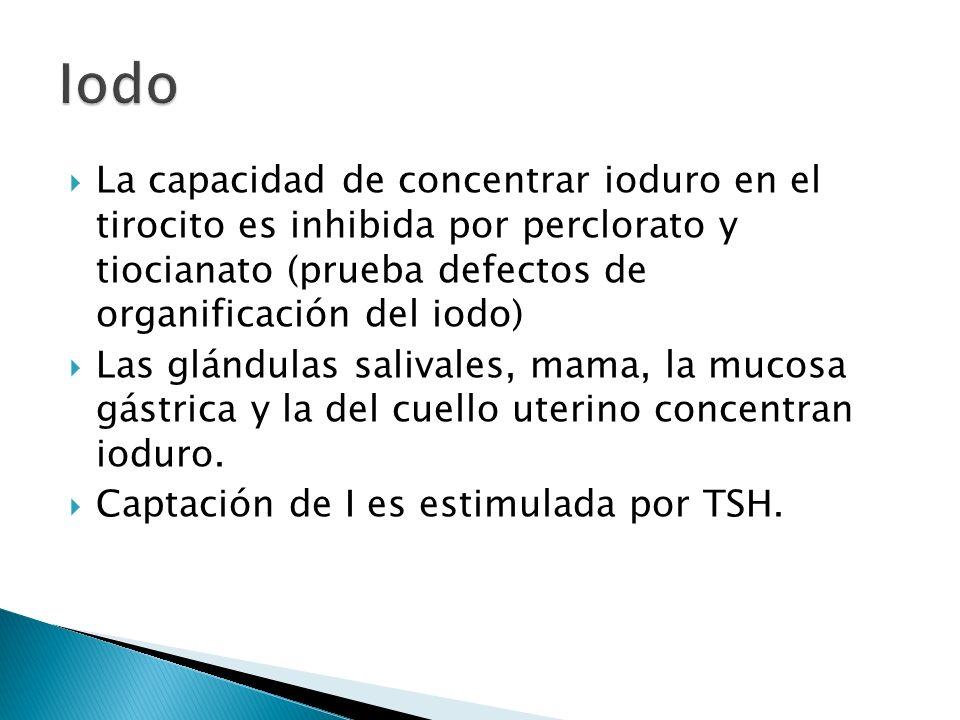 Organogénesis tiroidea no depende de la acción de la TSH (en etapa temprana).