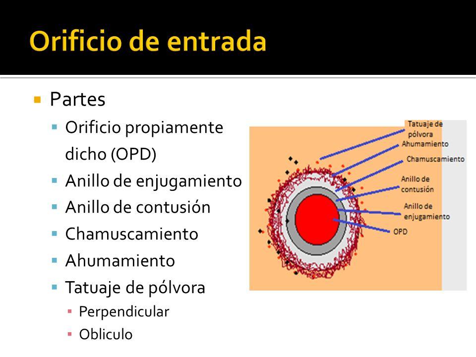 Partes Orificio propiamente dicho (OPD) Anillo de enjugamiento Anillo de contusión Chamuscamiento Ahumamiento Tatuaje de pólvora Perpendicular Oblicul