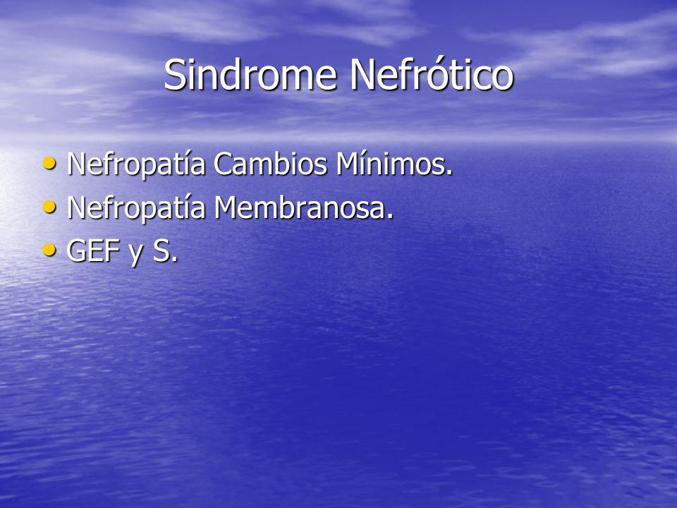 Sindrome Nefrótico Nefropatía Cambios Mínimos. Nefropatía Cambios Mínimos. Nefropatía Membranosa. Nefropatía Membranosa. GEF y S. GEF y S.