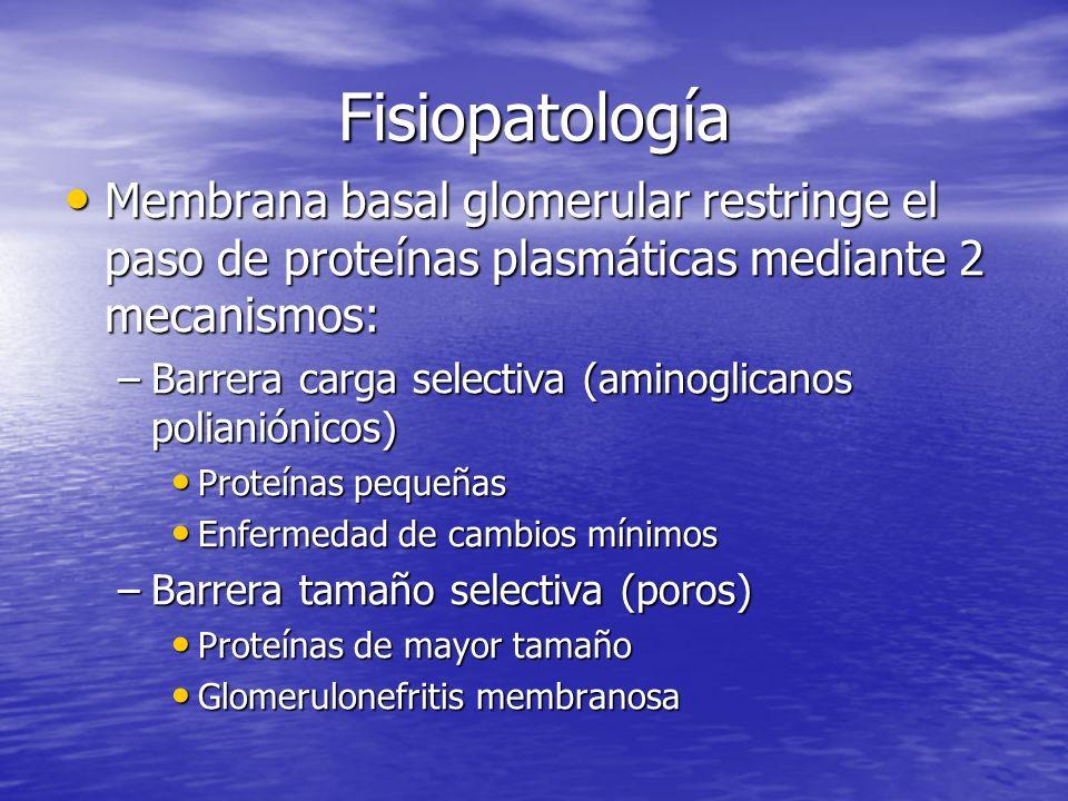 Fisiopatología Membrana basal glomerular restringe el paso de proteínas plasmáticas mediante 2 mecanismos: Membrana basal glomerular restringe el paso