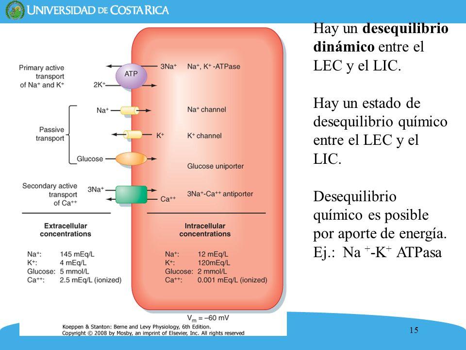 15 Hay un desequilibrio dinámico entre el LEC y el LIC. Hay un estado de desequilibrio químico entre el LEC y el LIC. Desequilibrio químico es posible