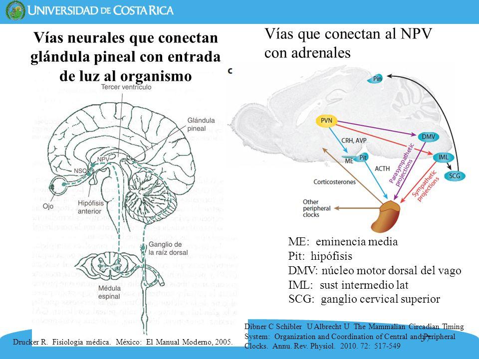 37 Drucker R. Fisiología médica. México: El Manual Moderno, 2005. Vías neurales que conectan glándula pineal con entrada de luz al organismo Vías que