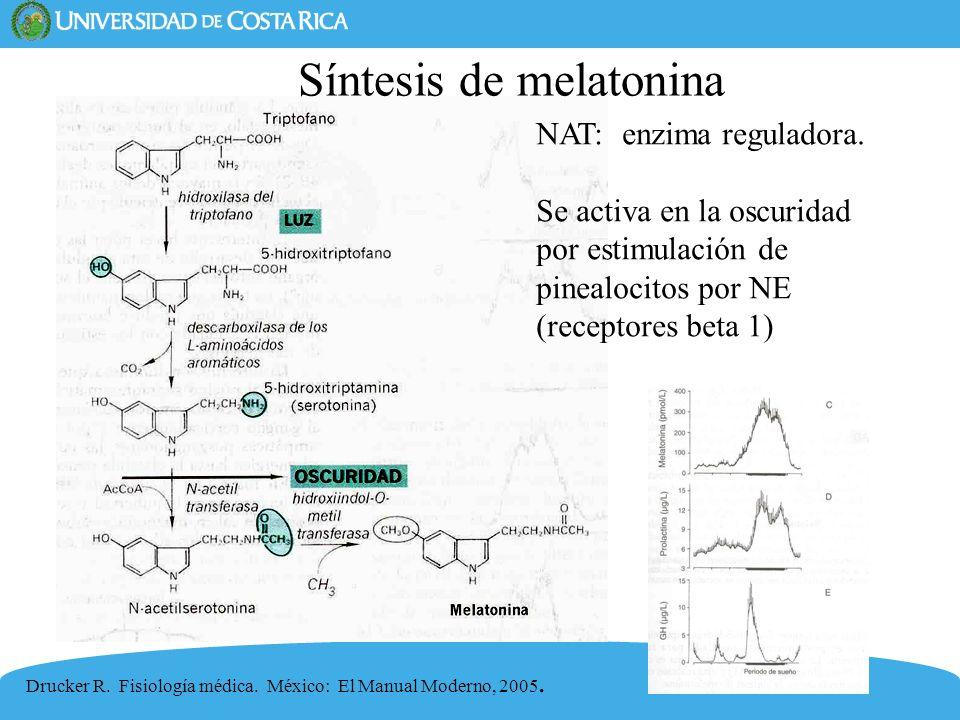 40 Drucker R. Fisiología médica. México: El Manual Moderno, 2005. Síntesis de melatonina NAT: enzima reguladora. Se activa en la oscuridad por estimul