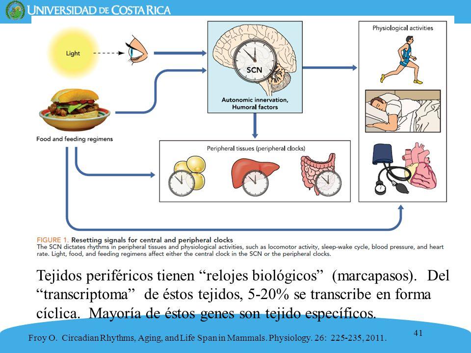41 Tejidos periféricos tienen relojes biológicos (marcapasos). Deltranscriptoma de éstos tejidos, 5-20% se transcribe en forma cíclica. Mayoría de ést