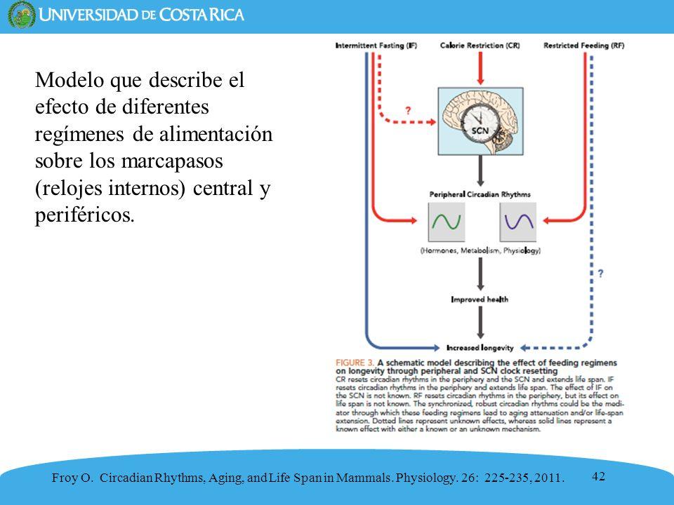 42 Modelo que describe el efecto de diferentes regímenes de alimentación sobre los marcapasos (relojes internos) central y periféricos. Froy O. Circad
