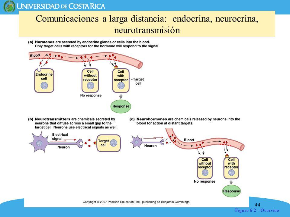 44 Figure 6-2 - Overview Comunicaciones a larga distancia: endocrina, neurocrina, neurotransmisión