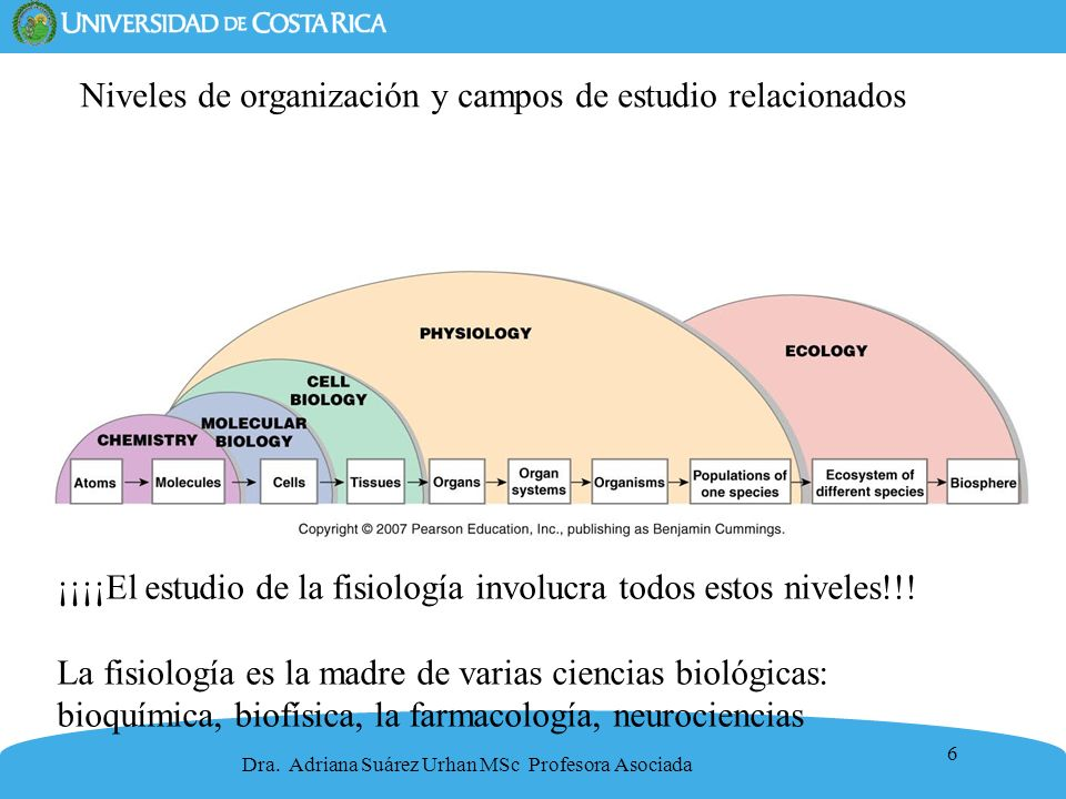 6 Niveles de organización y campos de estudio relacionados Dra. Adriana Suárez Urhan MSc Profesora Asociada ¡¡¡¡El estudio de la fisiología involucra