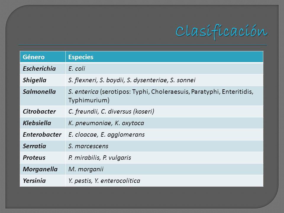 GéneroEspecies EscherichiaE. coli ShigellaS. flexneri, S. boydii, S. dysenteriae, S. sonnei SalmonellaS. enterica (serotipos: Typhi, Choleraesuis, Par