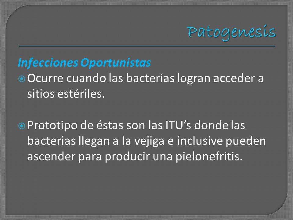 Infecciones Oportunistas Ocurre cuando las bacterias logran acceder a sitios estériles. Prototipo de éstas son las ITUs donde las bacterias llegan a l