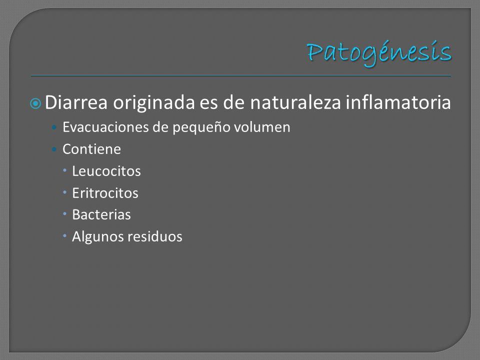 Diarrea originada es de naturaleza inflamatoria Evacuaciones de pequeño volumen Contiene Leucocitos Eritrocitos Bacterias Algunos residuos