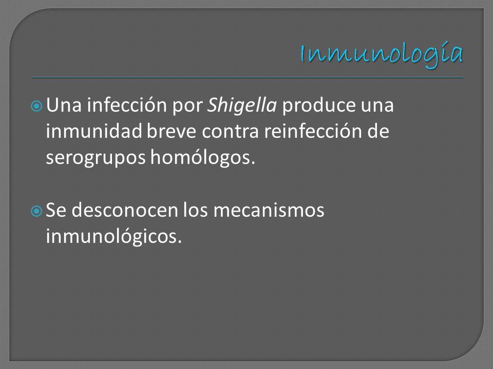 Una infección por Shigella produce una inmunidad breve contra reinfección de serogrupos homólogos. Se desconocen los mecanismos inmunológicos.