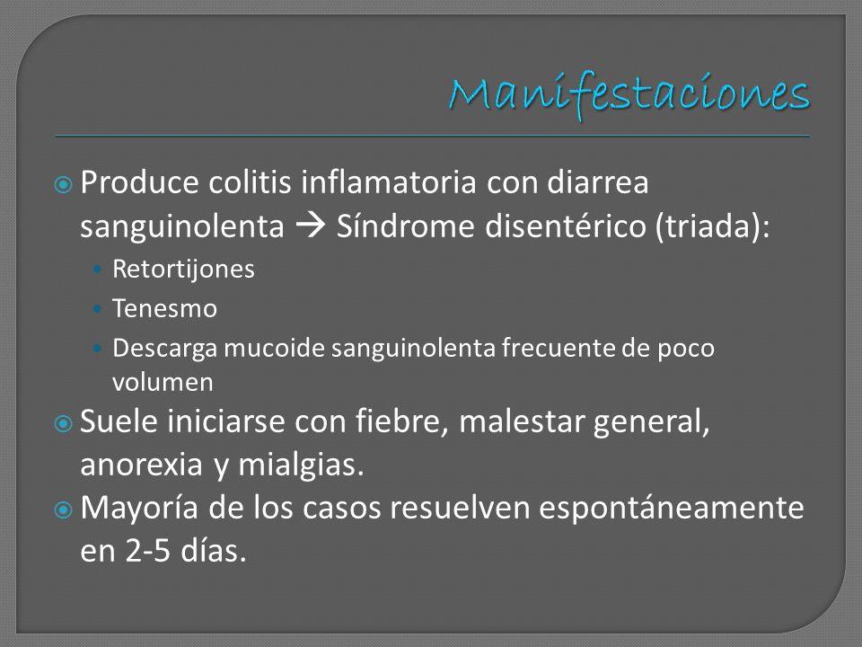 Produce colitis inflamatoria con diarrea sanguinolenta Síndrome disentérico (triada): Retortijones Tenesmo Descarga mucoide sanguinolenta frecuente de