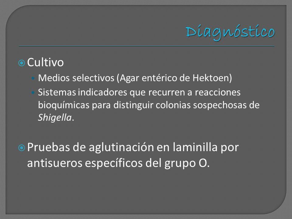 Cultivo Medios selectivos (Agar entérico de Hektoen) Sistemas indicadores que recurren a reacciones bioquímicas para distinguir colonias sospechosas d
