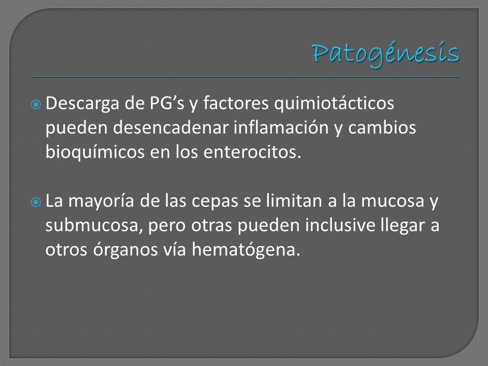 Descarga de PGs y factores quimiotácticos pueden desencadenar inflamación y cambios bioquímicos en los enterocitos. La mayoría de las cepas se limitan