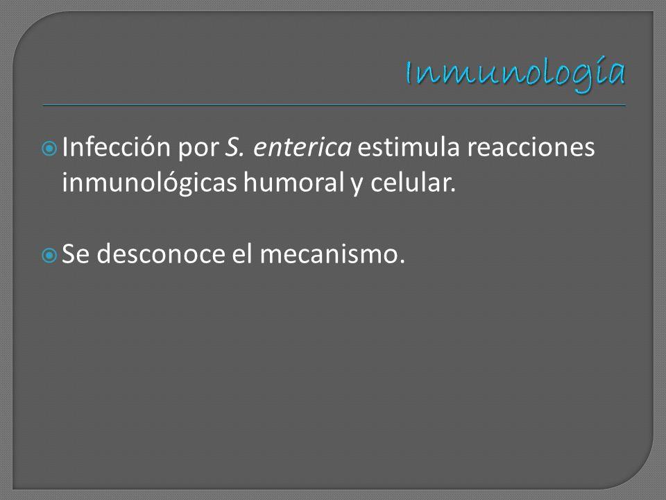 Infección por S. enterica estimula reacciones inmunológicas humoral y celular. Se desconoce el mecanismo.