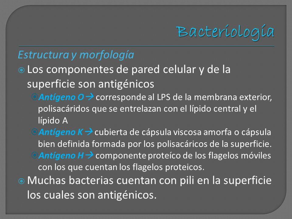 Estructura y morfología Los componentes de pared celular y de la superficie son antigénicos Antígeno O corresponde al LPS de la membrana exterior, pol