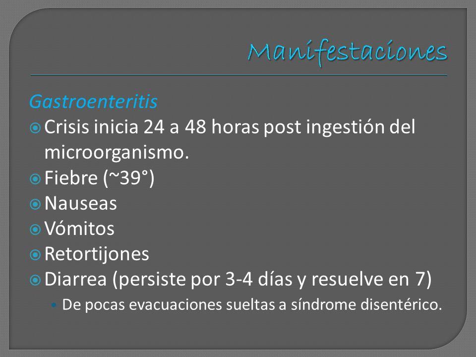 Manifestaciones Gastroenteritis Crisis inicia 24 a 48 horas post ingestión del microorganismo. Fiebre (~39°) Nauseas Vómitos Retortijones Diarrea (per