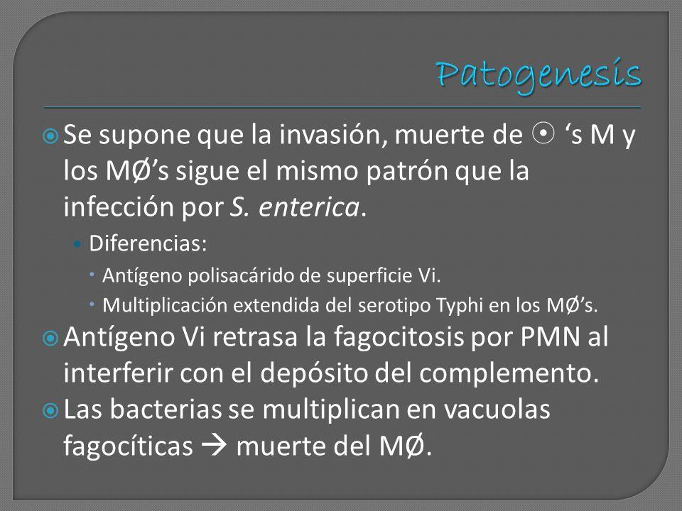 Se supone que la invasión, muerte de s M y los MØs sigue el mismo patrón que la infección por S. enterica. Diferencias: Antígeno polisacárido de super
