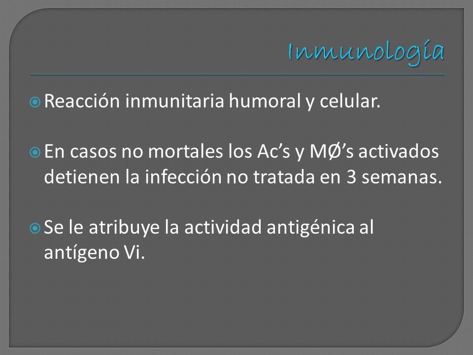 Reacción inmunitaria humoral y celular. En casos no mortales los Acs y MØs activados detienen la infección no tratada en 3 semanas. Se le atribuye la