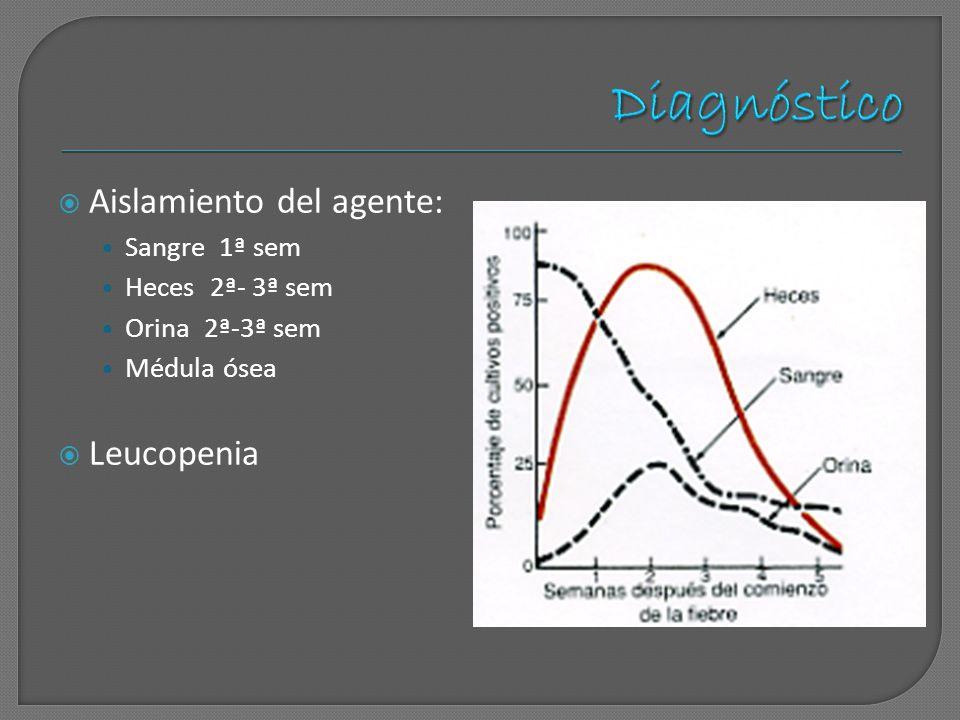 Aislamiento del agente: Sangre 1ª sem Heces 2ª- 3ª sem Orina 2ª-3ª sem Médula ósea Leucopenia