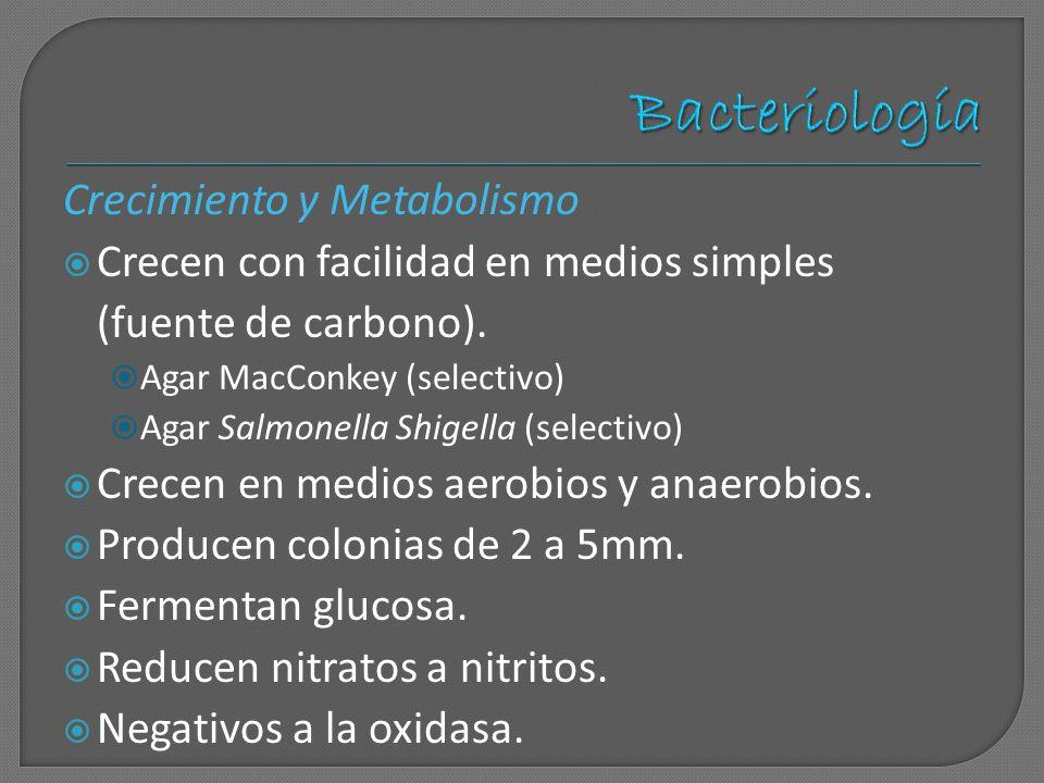 Crecimiento y Metabolismo Crecen con facilidad en medios simples (fuente de carbono). Agar MacConkey (selectivo) Agar Salmonella Shigella (selectivo)