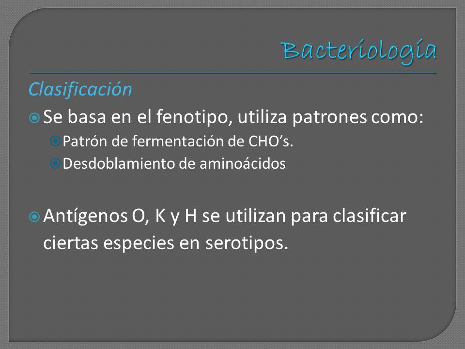 Clasificación Se basa en el fenotipo, utiliza patrones como: Patrón de fermentación de CHOs. Desdoblamiento de aminoácidos Antígenos O, K y H se utili