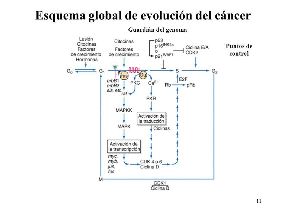 Esquema global de evolución del cáncer 11 Puntos de control Guardián del genoma