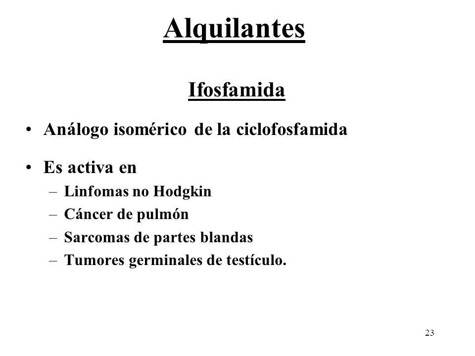 23 Ifosfamida Análogo isomérico de la ciclofosfamida Es activa en –Linfomas no Hodgkin –Cáncer de pulmón –Sarcomas de partes blandas –Tumores germinal