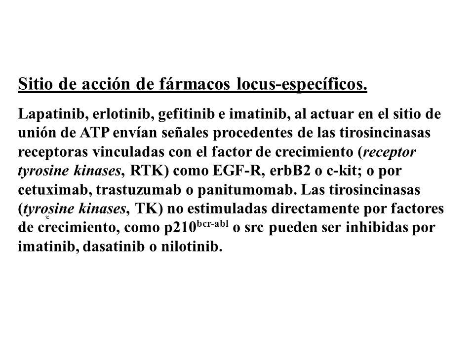 Sitio de acción de fármacos locus-específicos. Lapatinib, erlotinib, gefitinib e imatinib, al actuar en el sitio de unión de ATP envían señales proced