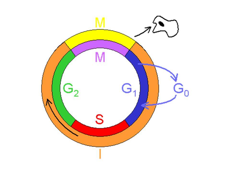 56 Anticuerpos monoclonales Específicos para un antígeno particular –Expresíón única o predominante en la célula tumoral.