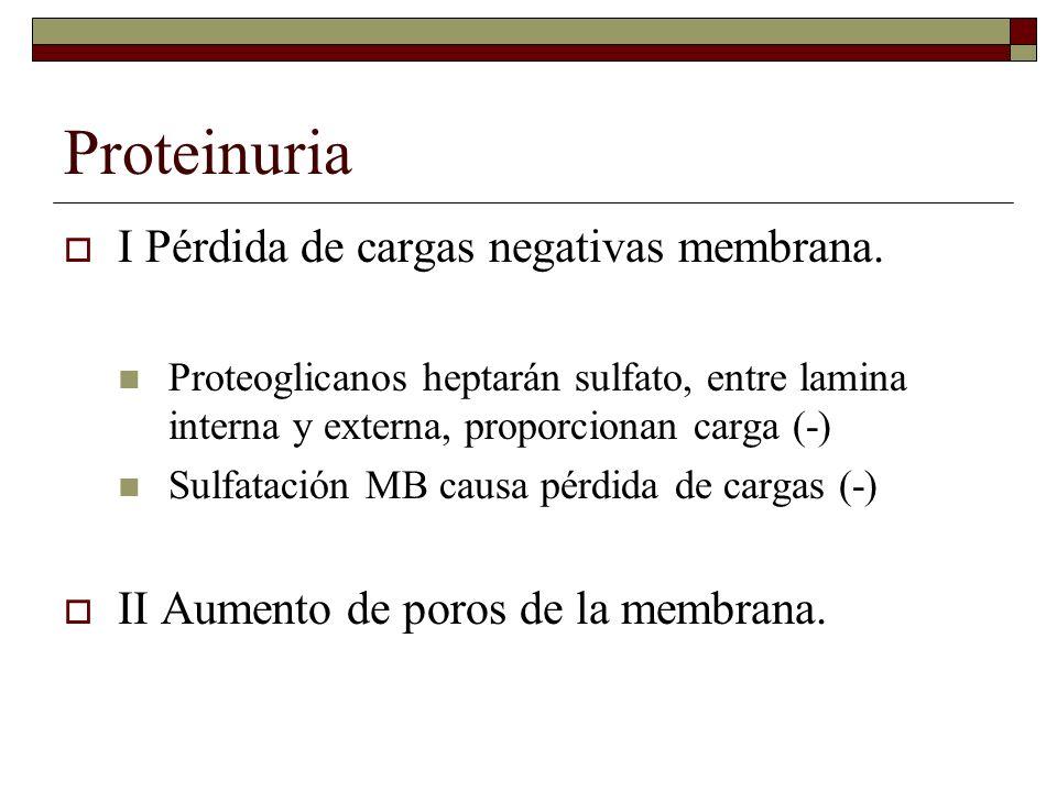 Proteinuria I Pérdida de cargas negativas membrana. Proteoglicanos heptarán sulfato, entre lamina interna y externa, proporcionan carga (-) Sulfatació