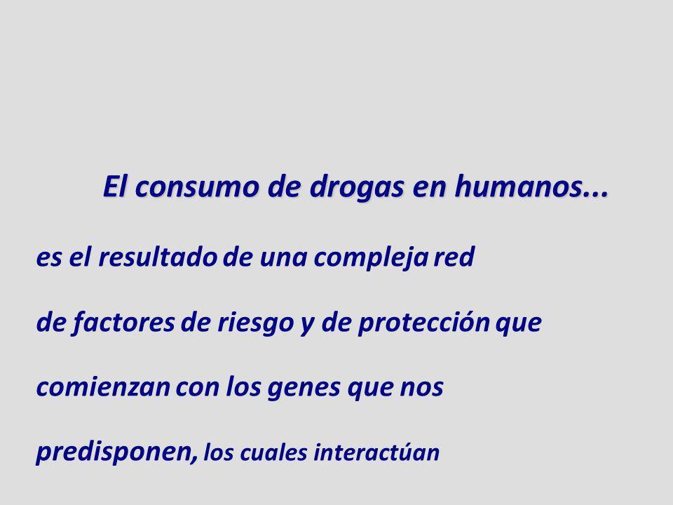 El consumo de drogas en humanos... es el resultado de una compleja red de factores de riesgo y de protección que comienzan con los genes que nos predi