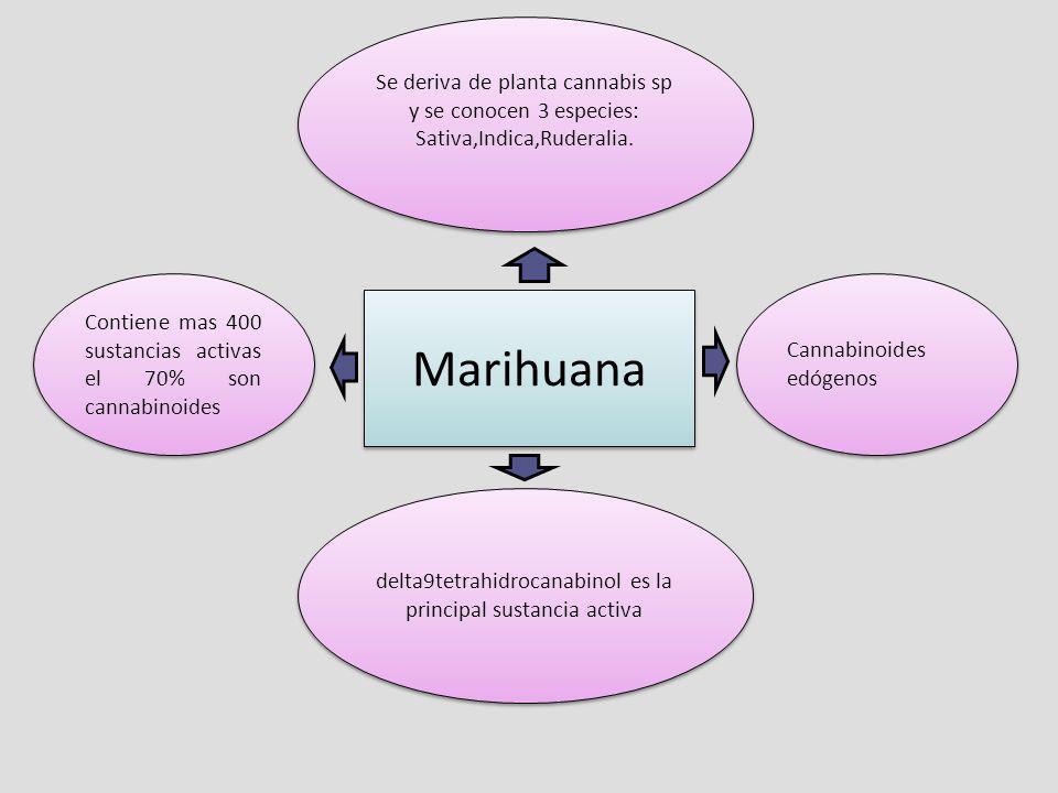 Contiene mas 400 sustancias activas el 70% son cannabinoides delta9tetrahidrocanabinol es la principal sustancia activa Se deriva de planta cannabis s