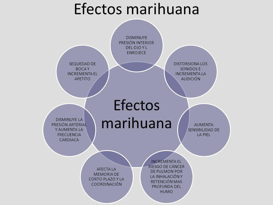 Efectos marihuana DISMINUYE PRESIÓN INTERIOR DEL OJO Y L ENROJECE DISTORSIONA LOS SONIDOS E INCREMENTA LA AUDICIÓN AUMENTA SENSIBILIDAD DE LA PIEL INC