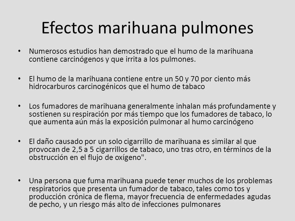 Efectos marihuana pulmones Numerosos estudios han demostrado que el humo de la marihuana contiene carcinógenos y que irrita a los pulmones. El humo de