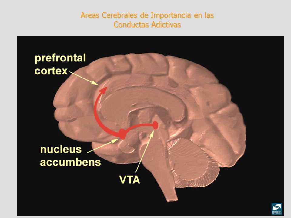 Efectos inhalantes Los efectos de los inhalantes son parecidos a los del alcohol e incluyen dificultad para hablar, euforia, mareo y falta de coordinación, somnolencia, alucinaciones y delirio El uso a largo plazo de inhalantes puede descomponer la mielina, el tejido graso que forma la envoltura protectora de algunas fibras nerviosas( perdida de audicion, neuropatia periferica, daño al sistema nervioso central Daño medula ósea (leucemia) Daño renal