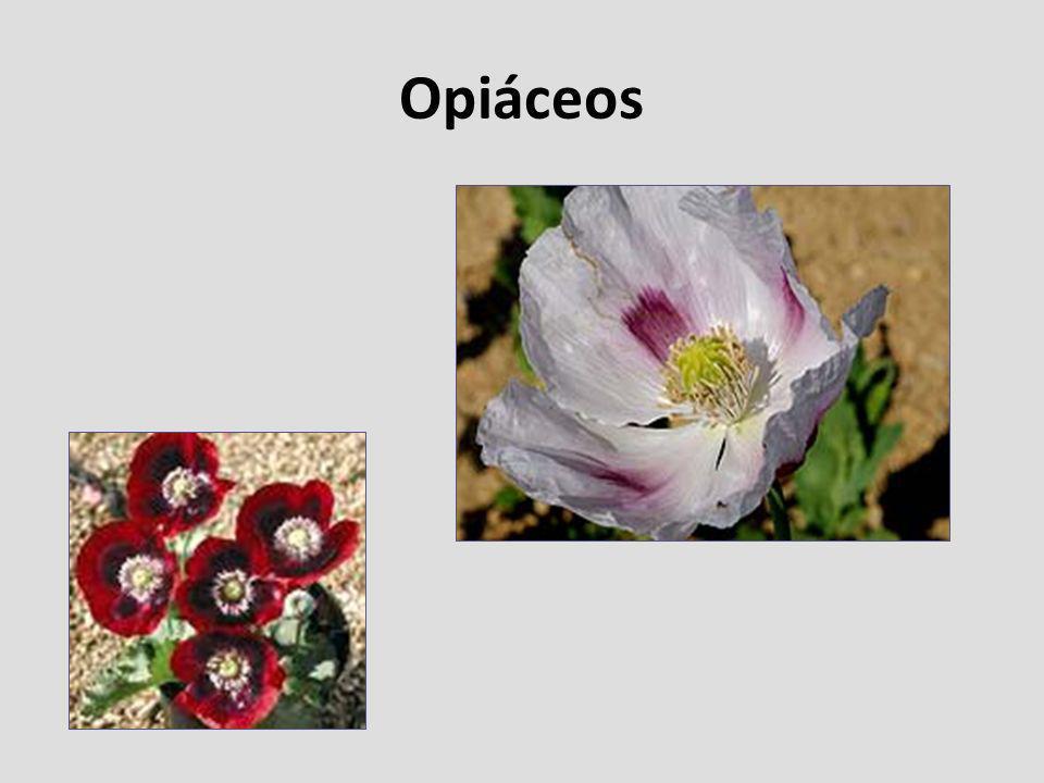 Opiáceos