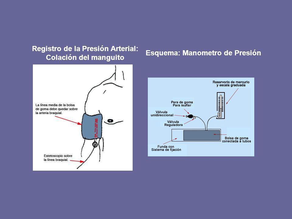 Registro de la Presión Arterial: Colación del manguito Esquema: Manometro de Presión