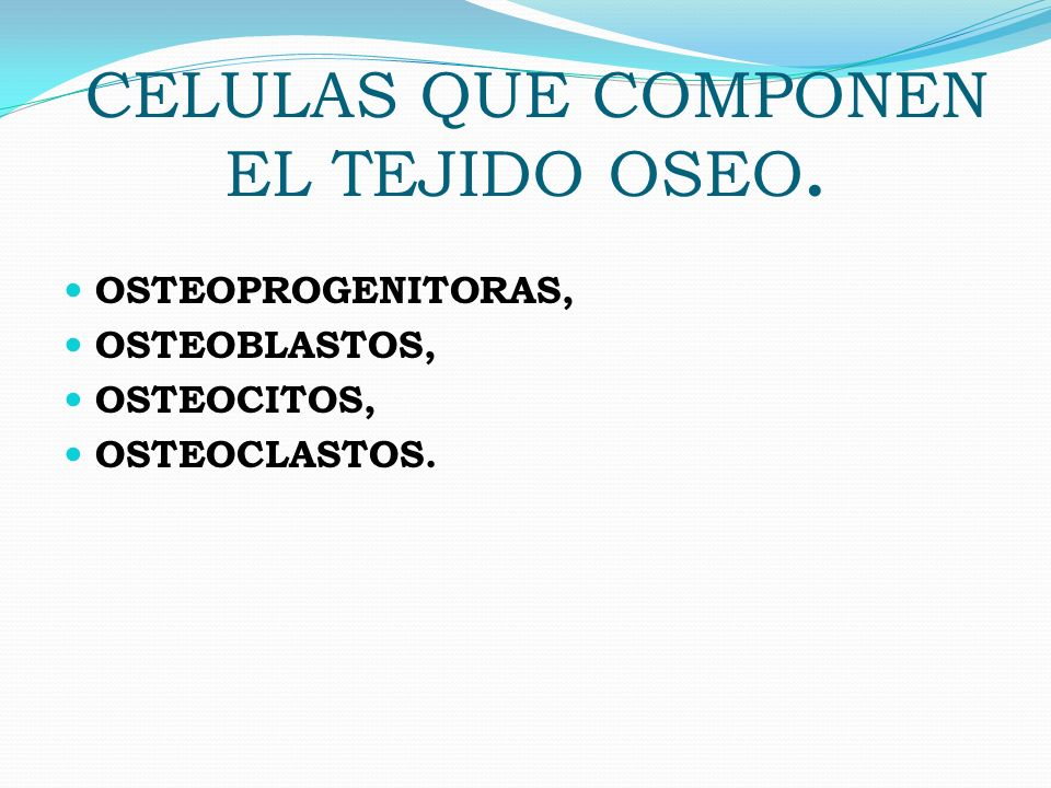 CELULAS QUE COMPONEN EL TEJIDO OSEO. OSTEOPROGENITORAS, OSTEOBLASTOS, OSTEOCITOS, OSTEOCLASTOS.
