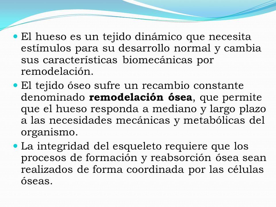 El hueso es un tejido dinámico que necesita estímulos para su desarrollo normal y cambia sus características biomecánicas por remodelación. El tejido