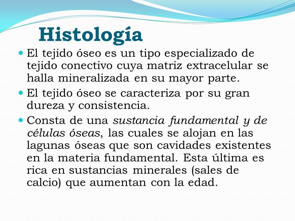 Histología El tejido óseo es un tipo especializado de tejido conectivo cuya matriz extracelular se halla mineralizada en su mayor parte. El tejido óse