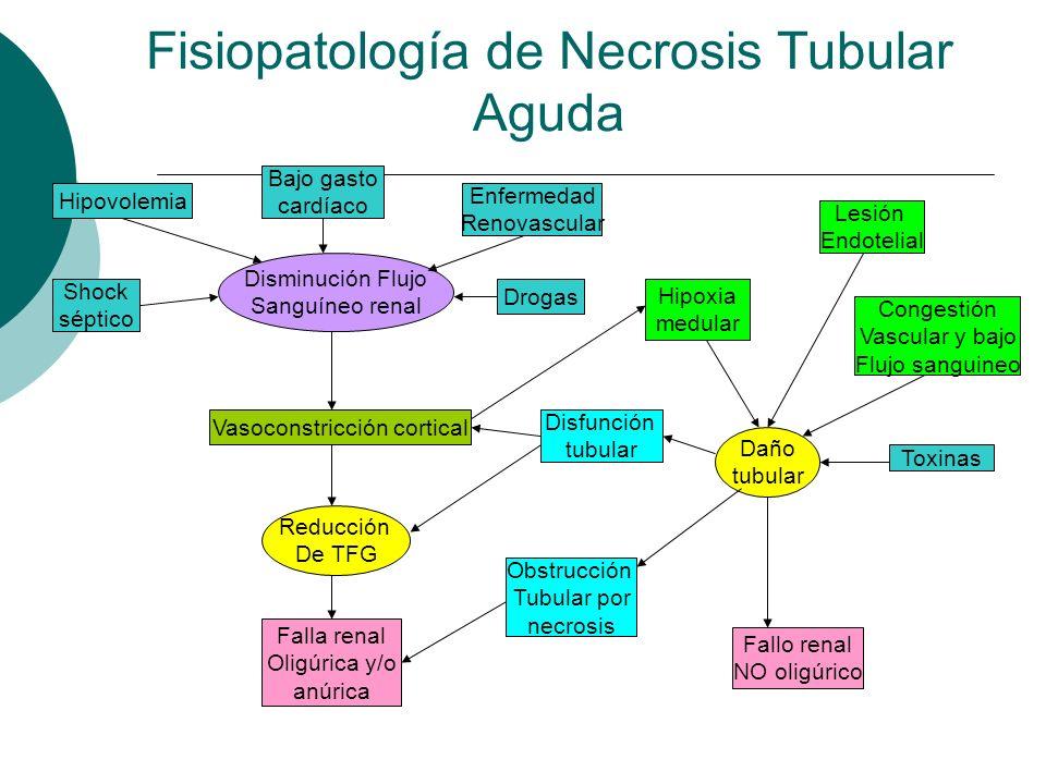 Fisiopatología de Necrosis Tubular Aguda Disminución Flujo Sanguíneo renal Vasoconstricción cortical Reducción De TFG Falla renal Oligúrica y/o anúric