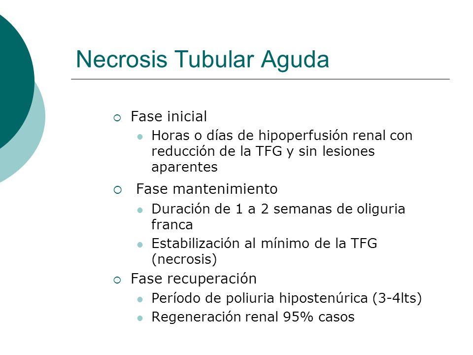 Necrosis Tubular Aguda Fase inicial Horas o días de hipoperfusión renal con reducción de la TFG y sin lesiones aparentes Fase mantenimiento Duración d
