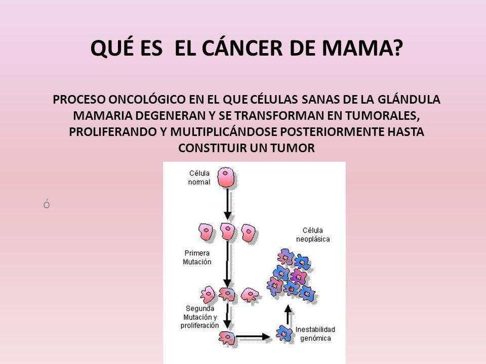 QUÉ ES EL CÁNCER DE MAMA? PROCESO ONCOLÓGICO EN EL QUE CÉLULAS SANAS DE LA GLÁNDULA MAMARIA DEGENERAN Y SE TRANSFORMAN EN TUMORALES, PROLIFERANDO Y MU