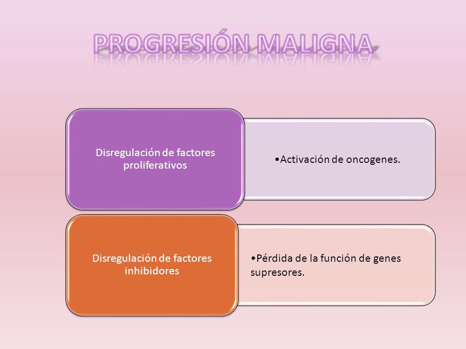 Activación de oncogenes. Disregulación de factores proliferativos Pérdida de la función de genes supresores. Disregulación de factores inhibidores