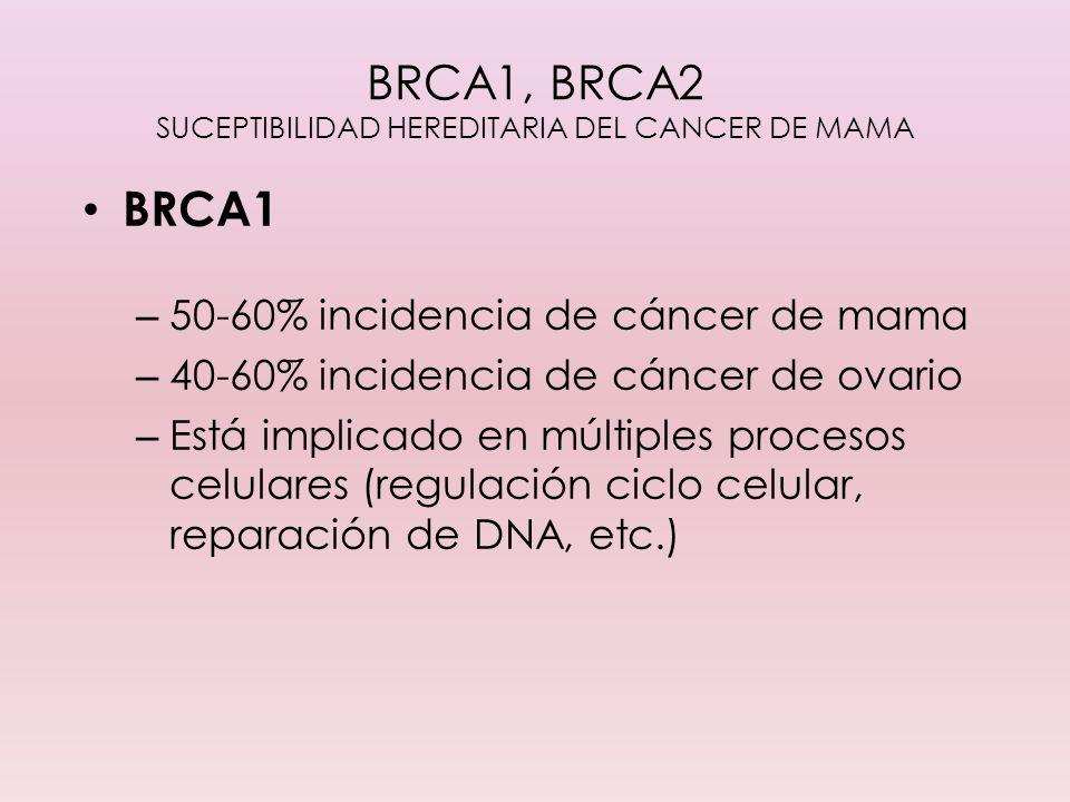 BRCA1, BRCA2 SUCEPTIBILIDAD HEREDITARIA DEL CANCER DE MAMA BRCA1 – 50-60% incidencia de cáncer de mama – 40-60% incidencia de cáncer de ovario – Está