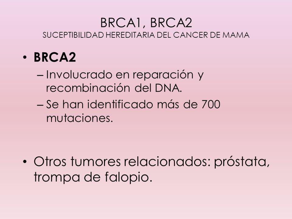 BRCA1, BRCA2 SUCEPTIBILIDAD HEREDITARIA DEL CANCER DE MAMA BRCA2 – Involucrado en reparación y recombinación del DNA. – Se han identificado más de 700