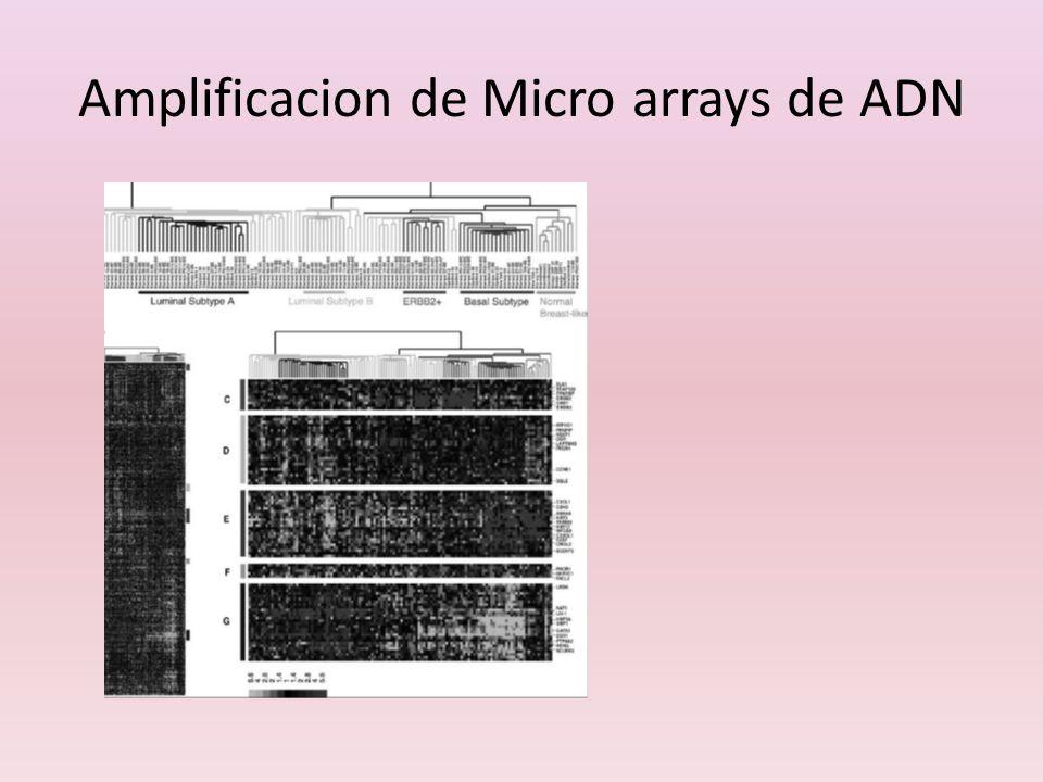 Amplificacion de Micro arrays de ADN