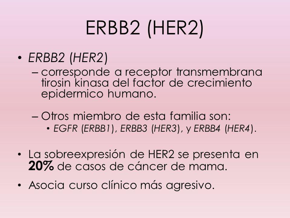 ERBB2 (HER2) – corresponde a receptor transmembrana tirosin kinasa del factor de crecimiento epidermico humano. – Otros miembro de esta familia son: E